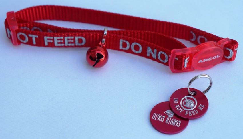 DO NOT FEED REFLECTIVE SAFETY CAT COLLAR RED & PERSONALISED TAG WITH CAT BOWL